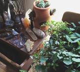 Plants & Crystals