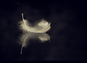 Angels of a Feather...