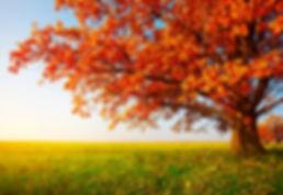 therapie-famille-arbre