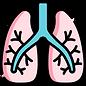 pulmones.png