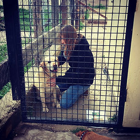 shiatsu para perros en valencia