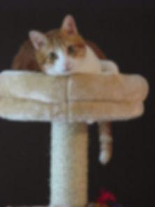 terapias holisticas para gatos