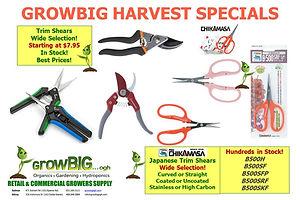 Harvest Scissors! Chikamasas in stock!