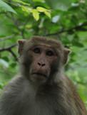 Monkey in Tree