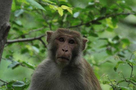 Mono en árbol