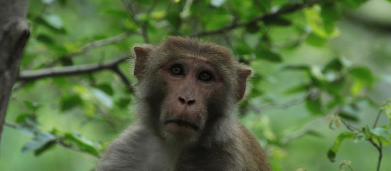 Kann man Sie fangen wie einen Affen?