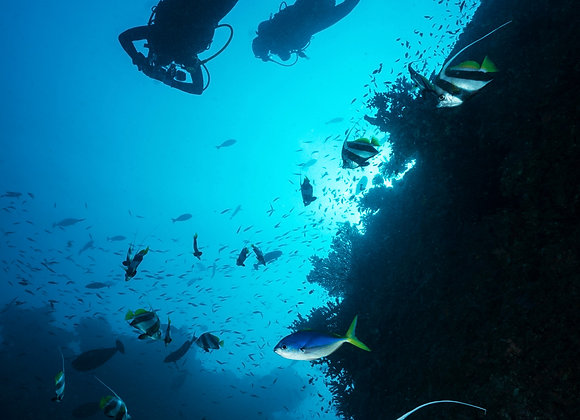 Discovery Scuba Diving (No diving license)