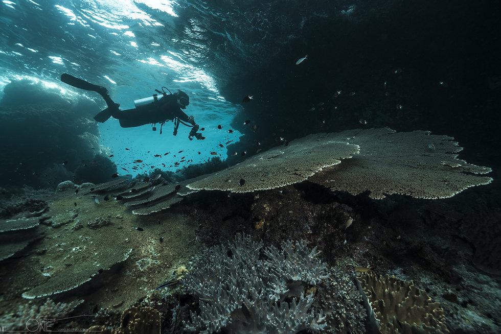 best diving trip in Samui