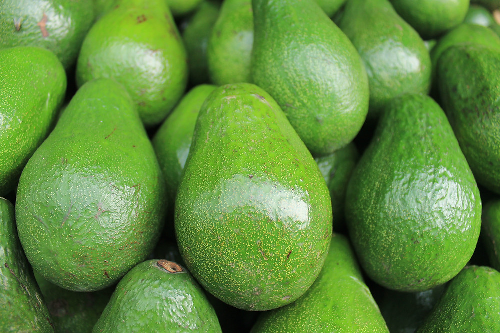 bright green unripe avocados