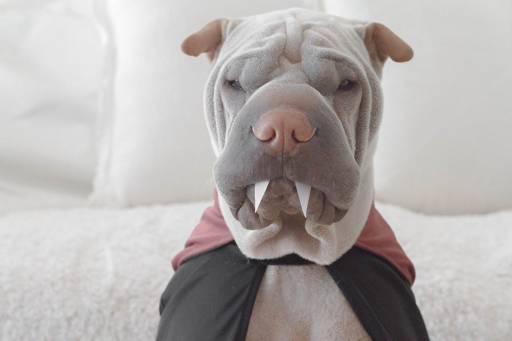 Enter your dog in Murfreesboro's Dog costume contest
