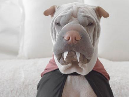 Awesome Dog Social Media Superstars