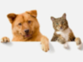 Dog and Cat photos for website.jpg