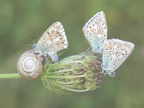 Buterflies and Snail