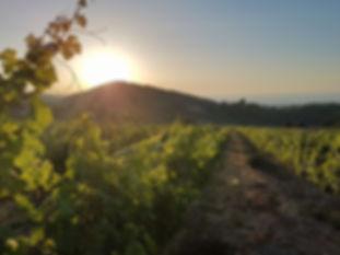 North Cyprus Vineyard & Wine Tasting Tour