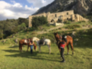 Horse Riding Lessons and Hacks in North Cyprus