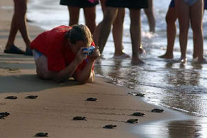 Turtle Nesting and Releasing North Cyprus