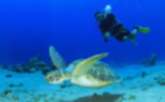 Diving in North Cyprus