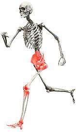 douleurs corps humain