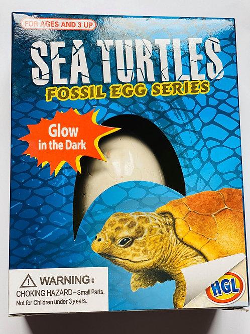 Sea Turtle Fossil Egg