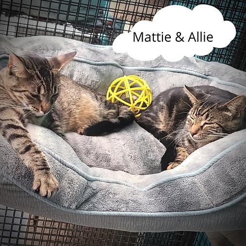 Mattie & Allie(3).png