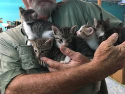 Kittens 4-11-17