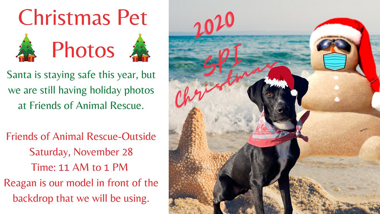 Christmas Pet Photos(1).png