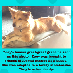 Zoey Adopted