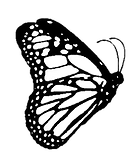 butterfly%20-%20Shaire_edited.png