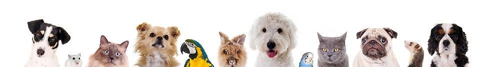 footer pets.jpg