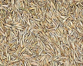 Grass Seed Grass Roots Lawn Aeration Ore