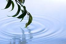 branch-touching-water-000005145500xsmall