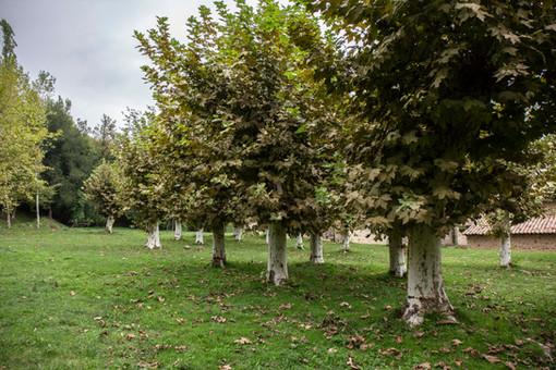 L'arbreda