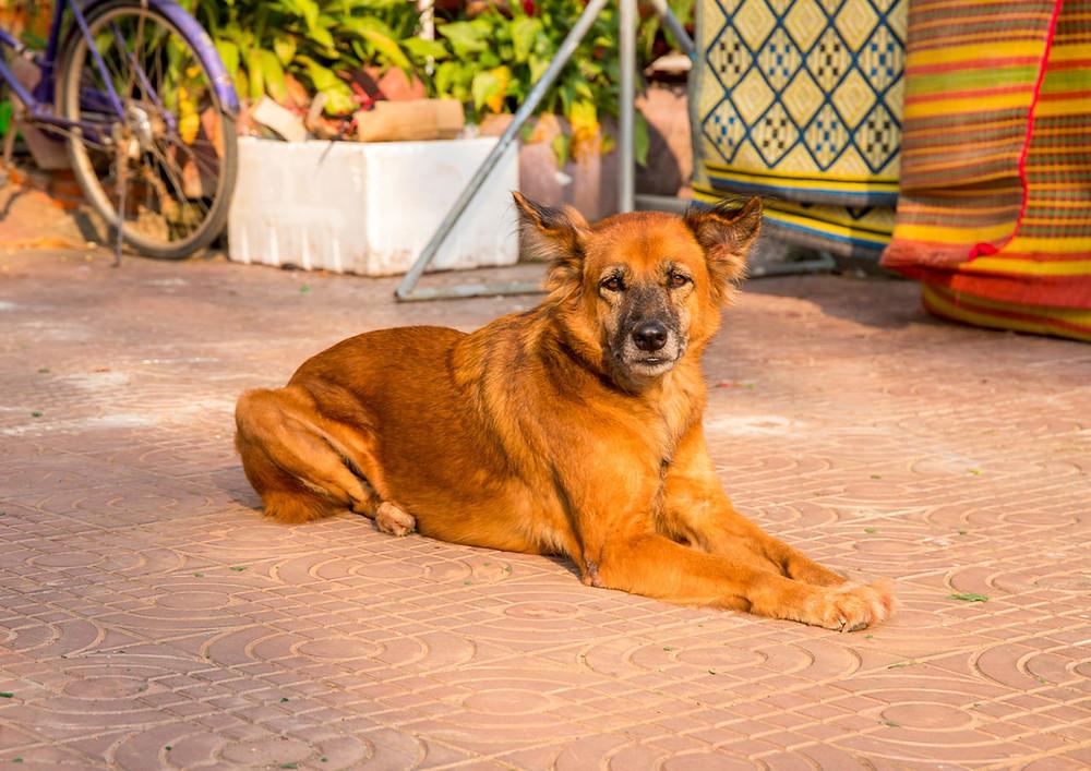 Projeto Cães do Jardim