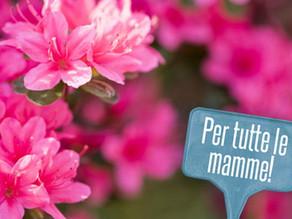 """La festa della Mamma. A Pforzheim festeggiata la Mamma più giovane, la più anziana e quella con la """""""