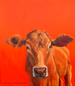 Cow orange