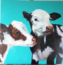 Cows turquoise