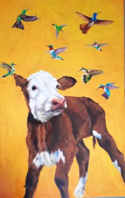 Calf with birds