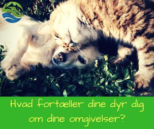 Hvad vil dine kæledyr gerne fortælle dig?