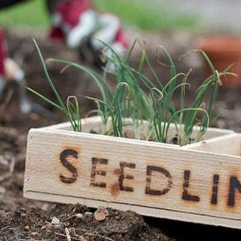 Planting Seeds, Cultivating Growth