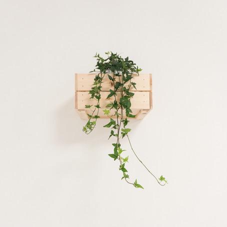 How To: Office Vertical Garden