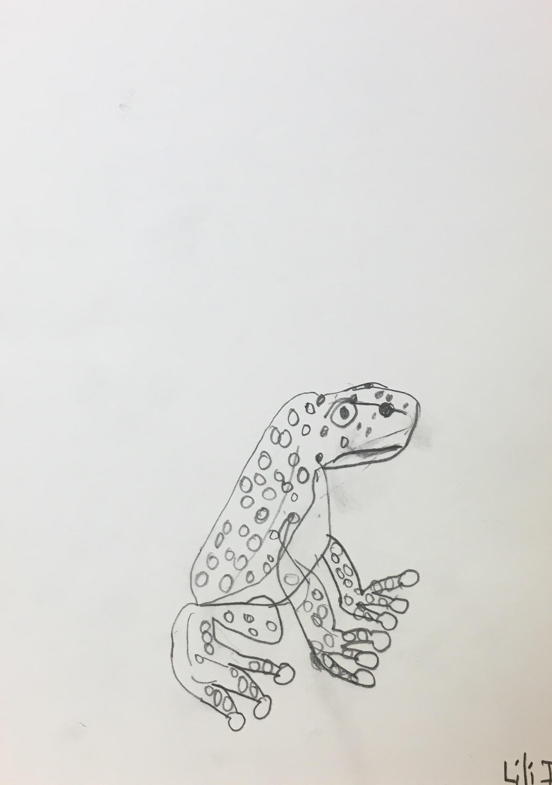 frog drawing lili