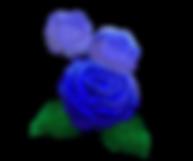 わたこのバラ.png