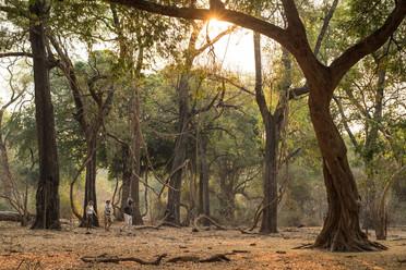Chikwenya Camp.jpg