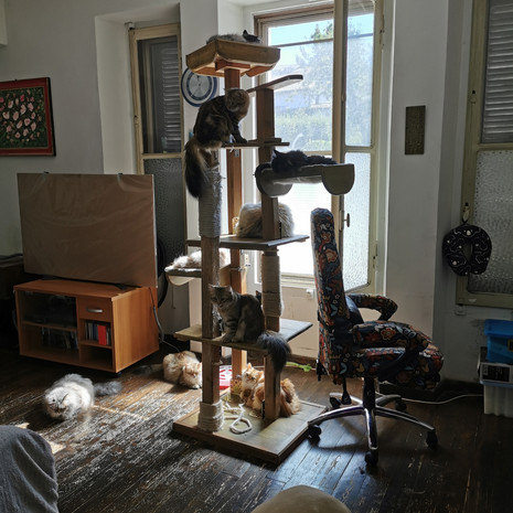 pensione per gatti sofistigatti (15).jpg