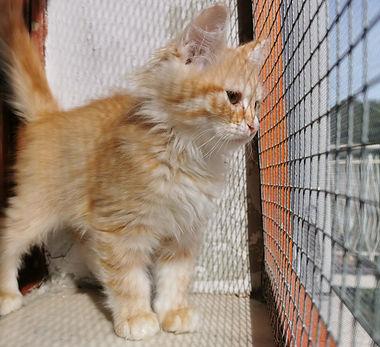 pensione per gatti sofistigatti (12).jpg