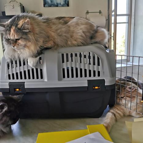 pensione per gatti sofistigatti (5).jpg