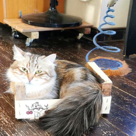 pensione per gatti sofistigatti (3).jpg