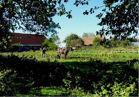 Bild Opas Bauernhof.png