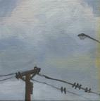 Bird on a Wire 07