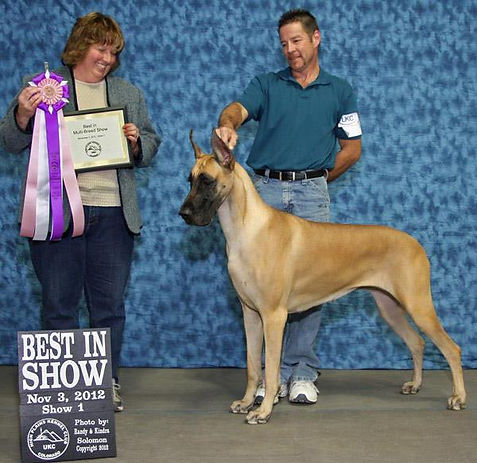 BIS Great Dane, UKC Best In Show, Akasha, Don Volleberg